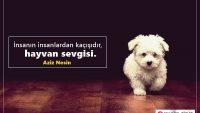 Hayvan Sevgisi İle İlgili Sözler, Hayvan Sevgisi Sözleri