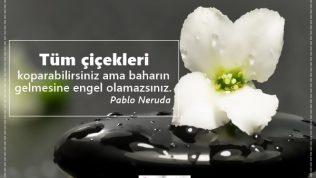 Çiçek Sözleri, Çiçeklerle İlgili Güzel Sözler